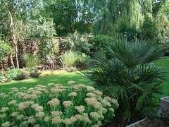 Chamaerops humilis uk (best4garden- wood products) Tags: tree palm humilis darf chamaerops
