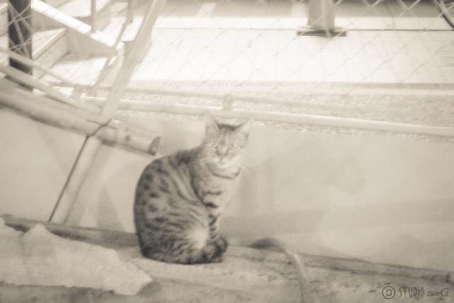 Today's Cat@2012-10-14