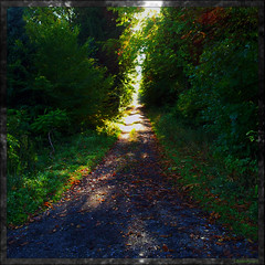 Herbst 3 | Autumn 3 | Towards the light (Badenfocus_Thanks for 725k views) Tags: color colour deutschland colours farbe baum rahmen farben niedersachsen lowersaxony badenfocus