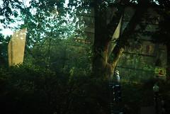 (lincoln koga) Tags: vacation tree verde green nature washington nikon frias momento eua observe lugares lincoln urbano cenrio rvore reflexo passeio criao transparncia observando koga encontros aprendizado explorando estadosunidosdaamrica chamado admirao contemplao d80 18135mm pedaosdemim expressando aguardo euvejo lincolnkoga novosrumos euencontro meutempo lincolnseijikoga novoslugares meumomento refgiosecreto silncioreflexivo tempodesilncio meusencontros voudescobrindo vouexplorando ofertadeamor teentrego nossoviver tudoemmim aguardoporvoc