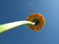 19 (Gioser_Chivas) Tags: naturaleza planta flor flawer gioserchivas