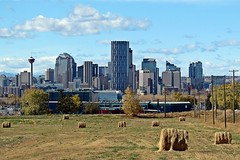 Calgary Skyline from NE Field (5of7) Tags: city urban calgary field skyline rural downtown alberta hay agriculture juxtaposition scape calgarytower calgaryalberta challengewinner friendlychallenges 3wins pregamewinner pregamesweepwinner pregamechallenges pregameduelwinner pregameduelshowcase tp20121028