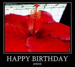 Per festeggiare mi dedico una foto dell' hibiscus:-) (anton) Tags: colore hibiscus fiore rosso anton rememberthatmomentlevel1