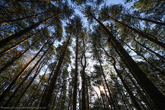 Up Through The Trees (Scott Cartwright Photography) Tags: trees abstract leaves forest canon wideangle bark trunk canoneos professionalphotographer superwide abstractphotography canoncameras canon7d scottcartwright shrewsburyphotographer shropshirephotographer shrewburyfreelancephotographer scottcartwrightphotography shropshirefreelancephotographer shrewsburyprofessionalphotographer