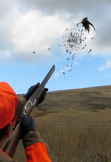 Idaho Luxury Wingshooting 18
