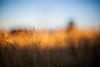 (drfugo) Tags: blue light sunset shadow sky beach grass sussex seaside bokeh smooth silk depthoffield explore newhaven explored canon5dmkii nikon55mmf12s nikkors55mmf12typeiv isitjustmeorhasflickrmadecolourbandsinthesky