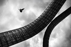 Departure (Commended, Landscape Photographer Of The Year 2012) (Russ Barnes Photography) Tags: blackandwhite bird mono nikon pigeon flight arches monochromatic coventry departure 2012 whittle tiltshift commended takeaview d700 landscapephotographeroftheyear nikkor24mmpce russbarnes lpoty