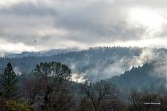 Texas Hill 3 (stephencurtin) Tags: california county trees usa foothills mist color wet clouds photography texas eldorado hills photograph vista layers stephencurtin