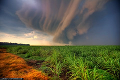 Storm-Cell-Cloud-Forming-OVer-Sugarcane-Fileds-in-Florida