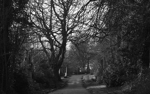 woodside B/W winter trees