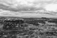 KeighleyMoor_26 (atkiteach) Tags: blackandwhite rural pen walking bradford sheep moors fold westyorkshire dogwalking moorland penfold keighley keighleymoor hiddenbradford hiddenbradfordyorkshire