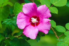 colorful flower (sal tinoco) Tags: flower flowers nature blossom bright outside color colors contrast saturated plant pollen purple pink green summer fantasticflower leaf sharp