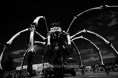 Kumo - Ile de Nantes (http://arnaudballay.wix.com/photographie) Tags: 2016 nantes juillet nikkorafs24120mmf4 vacances paysdelaloire france fr machinesdelile lamachine iledenantes rez araigne spider black white automate machine carroussel monstre royaldeluxe compagnielamachine