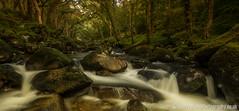 Dewerstone wood (GuyBerresfordPhotography.co.uk) Tags: wood forest trees tree mist fog moss rocks boulders mystical magical atmospheric fantasy gothic dewerstone wistmans devon dartmoor