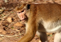 sri_lanka_trincomalee_06 (Kudosmedia) Tags: sri lanka trincomalee nelson fort fredrick harbour temple coast beach deer monkey legend fortress asia claringbold trevor