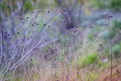 _DSC4400 (Sergiy G.) Tags: nature landscape ukraine mamiya645150mmf35 metamorphose wildplants    soe