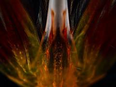P7110558 (Jeannot Kuenzel) Tags: jeannotkuenzel jeannot kuenzel wwwjk4unet jk4u malta scuba under water underwater diving photography macro supermacro olympus epl5 zen port leica dg macroelmarit 45mm f28 asph ois inon z240 240z ucl165 s2000 moods aliensofthesea aliensofthedeepblue alien deep blue mediterranean sea maltaunderwater maltaunderwatermacro maltaunderwaterphotography bestmaltaunderwaterpictures maltamacro underwaterphotography maltascubadiving supermacrophotography underwatersupermacro underwateralien underwaterworld underwatercreature underwatermacro extrememacro superextrememacro