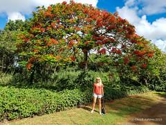 Grove Farm (3 of 16) (Chuck 55) Tags: grove farm kauai hawaii