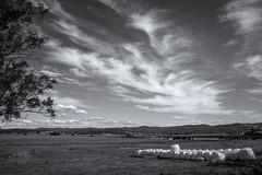 Change approaching (OzzRod) Tags: pentax k1 supertakumar28mmf35 pentaxsingleinaugust2016 monochrome blackandwhite landscape sky clouds cirrus silage rural farmland jellatjellat uncropped