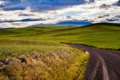 The Back, Back Roads (Culinary Fool) Tags: rollinghills usa washington 2016 2470mm28 clouds palousescenicbyway wa brendajpederson travel culinaryfool photography palouse roadtrip green landscape may hills travelwa