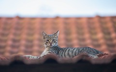 kittens (20) (Vlado Fereni) Tags: kitty kittens cats catsdogs animals animalplanet zagorje hrvatskozagorje hrvatska croatia nikond600 nikkor8020028