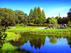 New Pond (dimaruss34) Tags: newyork brooklyn dmitriyfomenko image summer brooklynbotanicgarden pond reflection