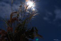 Moon Rainbow  (^^Teraon) Tags: japan canon eos m2 eosm2 travel trip  moon sonar som suono  tttrngtrng      fullmoon  luadoarcoris lunadelarcoiris lunaarcobaleno moonrainbow sigma50mmf14exdg rainbow night