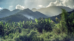 Laos : Muang Sing, landscape #1 (foto_morgana) Tags: analogphotography analogefotografie asia forest highland indochina landscape laos mountainous muangsing nikoncoolscan outdoor panoramic photographieanalogue scenic tourism travelexperience vuescan