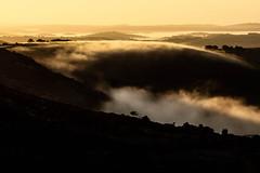 Sunrise and the fog (NikNak Allen) Tags: plymouth devon dartmoor moor moorland tree trees grass view landscape tor tors hill hills distance horizon sun morning mist light valley shadows gold golden