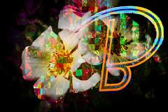 B mayúscula (seguicollar) Tags: flores letras rostro mujer cara faz b imagencreativa photomanipulación photocomposición surrealismo artedigital arte art artecreativo