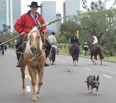 DSC_5248 (neyde zys) Tags: bandadabrigada brigadamilitar desfilefarroupilha gauchos indumentaria prendas tradicao