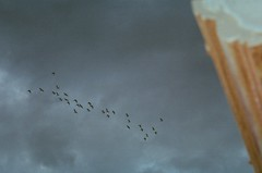 birds flying away from a storm (loslosnimu) Tags: sky storm film girl birds fun skateboarding philippines flock cebu analogue zerah