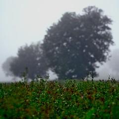 f60mm1:2.4 #1 ((Antonio Mariotti)) Tags: green fog xpro lawn 124 dew fujifilm nebbia rugiada prato bibbiena f60mm xpro1 rasoterrismi