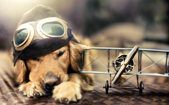 пёс пилот)