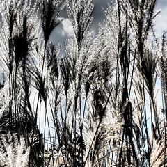 Wrocaw/Poland i - vii (summer_57) Tags: poland polska olympus polen botanicalgarden wrocaw breslau ogrdbotaniczny epl3