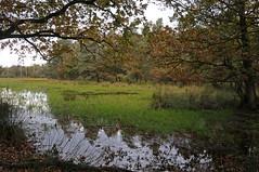 Vennetje (=Mirjam=) Tags: autumn oktober fall water herfst ven 2012 leersumseveld nikond300s