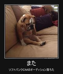また ソフトバンクCMのオーディション落ちた #ペット #犬 #ソフトバンク (Demochi.Net) Tags: life cute sexy japan fun japanese motivator culture 日本 ペット 猫 demotivator 金 家族 結婚 ゲイ 女 子供 おっぱい 愛犬 政治 社会 巨乳 文化 眼鏡 教育 demotivators 経済 女性 初恋 r18 女子 カップル 子猫 女装 お笑い motivators 会社 少子化 企業 ユーモア 恋 悪い 格差 風刺 一言 デモチ 大喜利