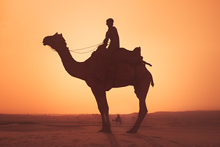 Silhouettes. Thar desert, India