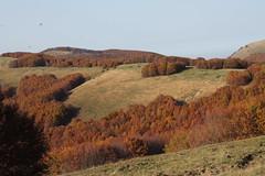 selva di ferriere (28) (michela dallavalle) Tags: autumn landscape woods selva di autunno paesaggio ferriere appennino bosco faggi piacentino