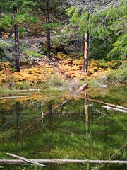 Reflection Pond (amidfallenleaves) Tags: reflections october diablolake northcascadesnp