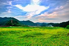 Rice field (tttske_C) Tags: japan ricefield 岐阜 gifu hdr 田園 郡上八幡 gujohachiman 郡上市