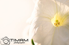 """f4 (""""Timam"""") Tags:"""