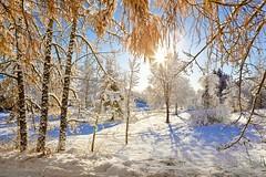 (Matilda Diamant) Tags: winter norway seasons norwegian nordic rusalka