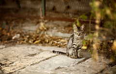 (Nasos Zovoilis) Tags: road above street trees roof winter urban pets white house snow cold color tree green nature beauty field animal animals yellow closeup rural cat fence fur outdoors nose one paw eyes kitten feline waiting europe pretty sitting vespa village view post image tabby tail gray hunting kitty fluffy athens front greece domestic tiles claw whisker curious tame glade snout purebred