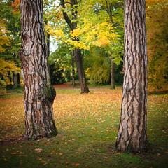 (Meppi73) Tags: park autumn trees tree fall leaves canon stuttgart 14 herbst bad 5d bltter bume baum cannstatt 35l