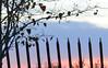 Slanted Fence (Annette LeDuff) Tags: sunset urban tree silhouette fence riverwalk detroitmi composersbreath fencedfriday photoannetteleduff annetteleduff thesunshinegroup chariotsofnaturelevel1 10252012