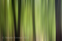 Abstract Trees in the Forest (Natalie Kinnear) Tags: trees brown abstract blur tree green nature leaves lines vertical forest print photography photo office leaf bedroom photos lounge den wallart conservatory photographic line hallway livingroom canvas study photographs photograph diningroom prints abstracts decor interiordesign frontroom forests homedecor snug linear ashdownforest canvases nataliekinnear