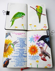 My Birds on my Moleskines (Milagritos9) Tags: flowers hummingbird handmade sketchbook daisy visualjournal lovebirds raven parrots pájaro songbirds moleskinerie loros pajaritos journalpages mily artistjournal picaflor birdpoem visualdiary milagritos birdillustration zumzum birdcollage illustratedjournal moleskinejournals moleskineproject artmoleskine moleskineartwork moleskinedrawing illustratedpoem birdjournal inspirationaljournal dibujodepájaro milycha poesíailustrada pájaroillustración dibujodeave spiritualjournal dibujodecolibrí agendailustrada moleskineartpages diariosilustrados pablonerudapoesía