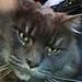 Lynn with Grumpy Cat