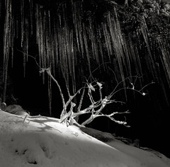 On Saddle Mountain, Oregon (austin granger) Tags: winter snow film oregon square spotlight icicles saddlemountain gf670 austingranger